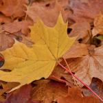 Herbstfarben-Shooting buchen!