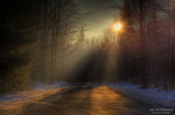 Lichtbrechung Wald HDR